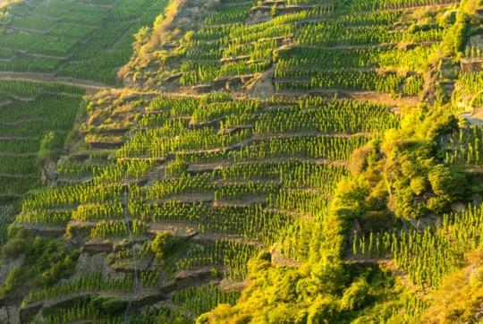 Rejse skræddersyet til danske vinnørder